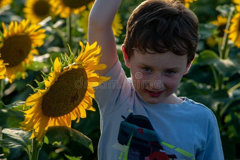 Χαρούμενο νέο αγόρι ομορφιάς με τον ηλίανθο που απολαμβάνει τη φύση και που γελά στον τομέα θερινών ηλίανθων Sunflare, ηλιαχτίδες στοκ φωτογραφίες