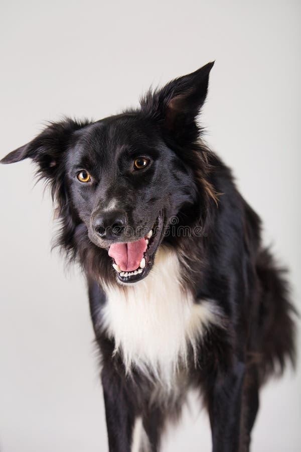 Χαρούμενο σκυλί στοκ φωτογραφίες