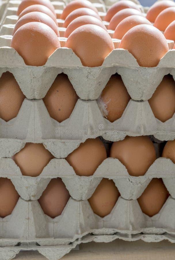Χαρτοκιβώτια και αυγά αυγών στοκ εικόνες με δικαίωμα ελεύθερης χρήσης