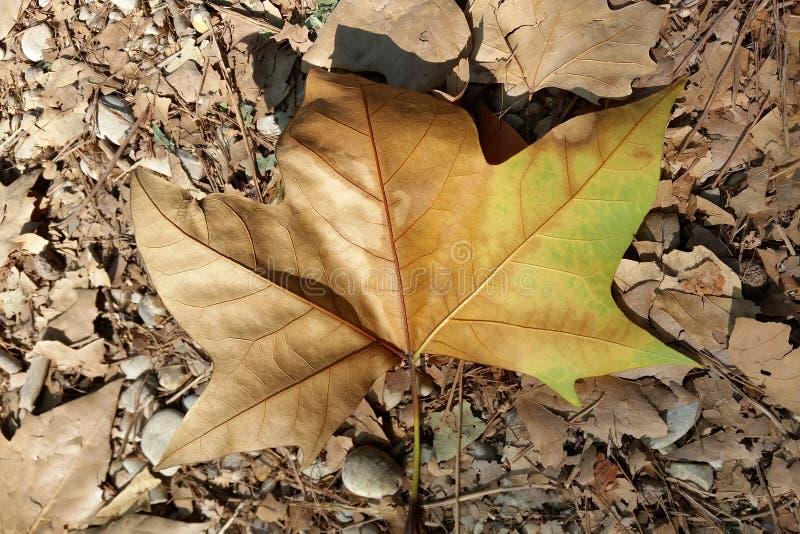 Χαλίκια και φύλλα στοκ φωτογραφία με δικαίωμα ελεύθερης χρήσης