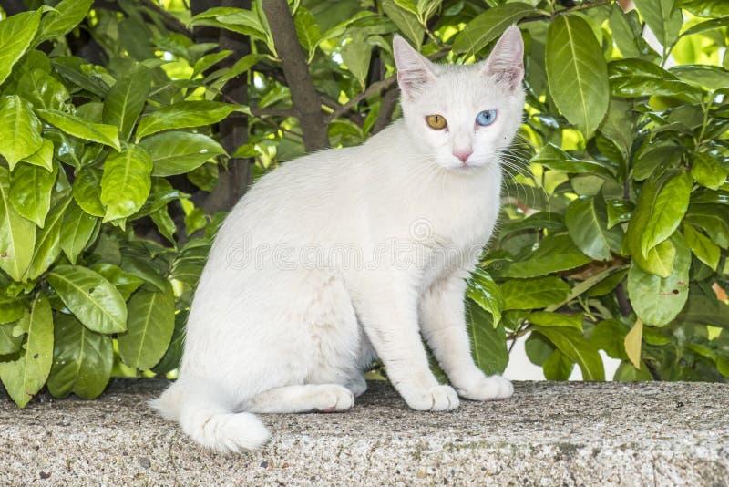 Χαλαρωμένη άσπρη γάτα με τα μπλε και πράσινα μάτια στοκ φωτογραφία με δικαίωμα ελεύθερης χρήσης