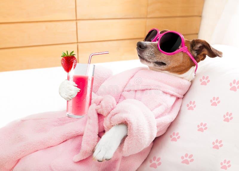 Χαλαρώστε το σκυλί wellness SPA στοκ φωτογραφίες με δικαίωμα ελεύθερης χρήσης