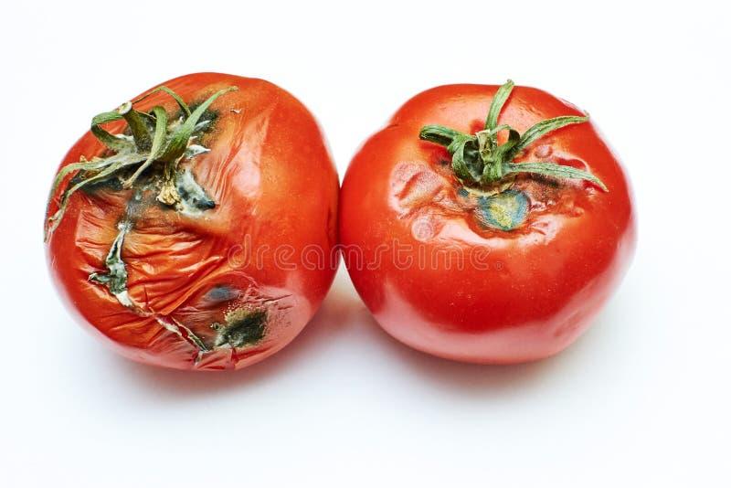 Χαλασμένη ντομάτα στοκ φωτογραφία με δικαίωμα ελεύθερης χρήσης