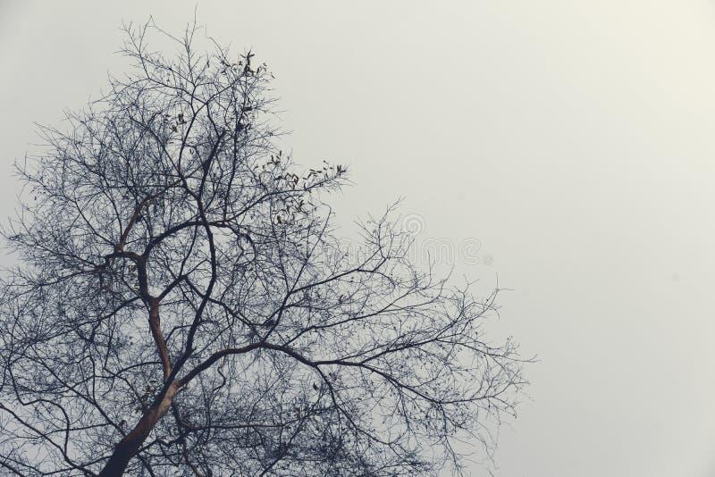 Χειμερινά δέντρα χωρίς πράσινα φύλλα το λυπημένο βράδυ στοκ εικόνες με δικαίωμα ελεύθερης χρήσης