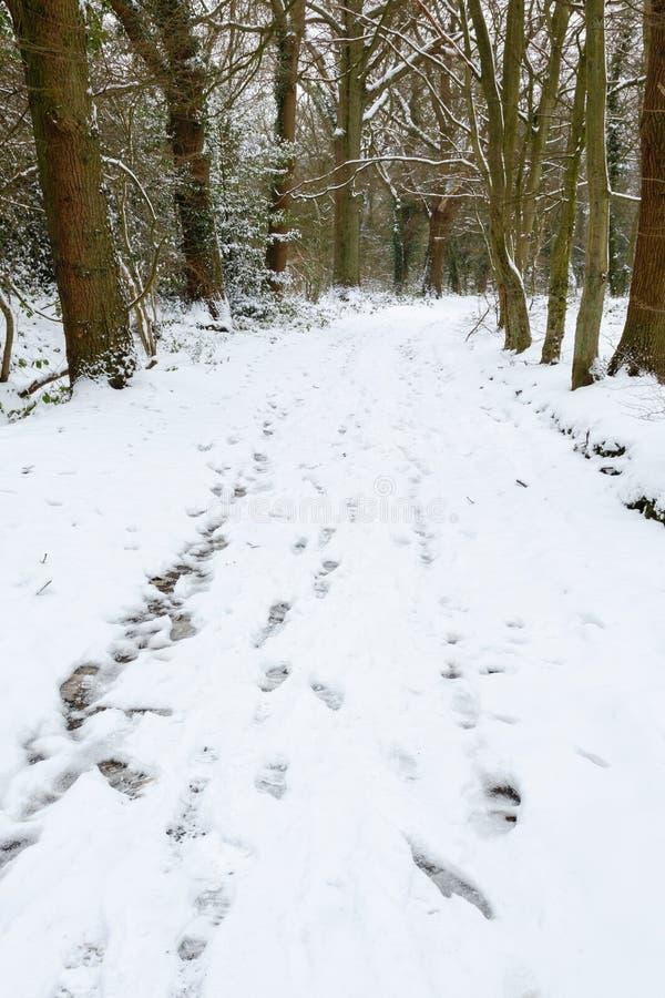 Χειμερινά ξύλα στοκ φωτογραφία με δικαίωμα ελεύθερης χρήσης