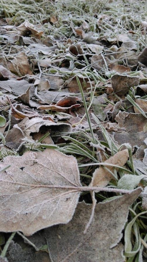 Χειμερινά φύλλα στοκ εικόνα με δικαίωμα ελεύθερης χρήσης