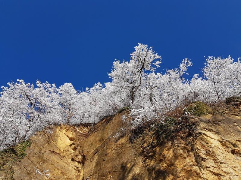 Χειμερινές αντιθέσεις στοκ φωτογραφίες με δικαίωμα ελεύθερης χρήσης