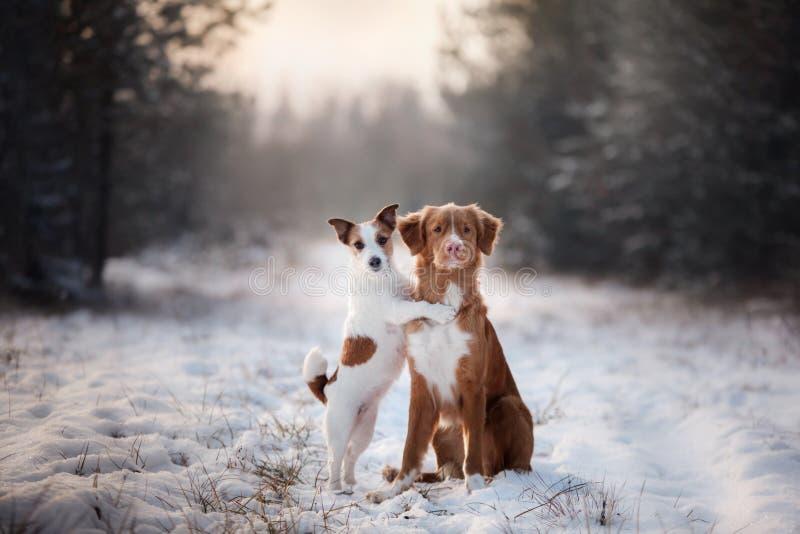 Χειμερινές διάθεση, φιλία και αγάπη δύο σκυλιών στοκ εικόνα με δικαίωμα ελεύθερης χρήσης