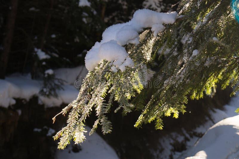 Χειμερινές περιπέτειες Χιονώδη δασικά Carpathians Ουκρανία στοκ εικόνα