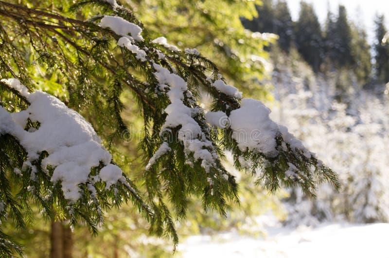Χειμερινές περιπέτειες Χιονώδη δασικά Carpathians Ουκρανία στοκ φωτογραφία