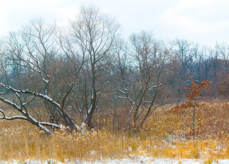 Χειμερινή δασόβια σκηνή στοκ φωτογραφίες με δικαίωμα ελεύθερης χρήσης