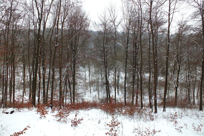 Χειμερινή δασόβια σκηνή στοκ φωτογραφία με δικαίωμα ελεύθερης χρήσης