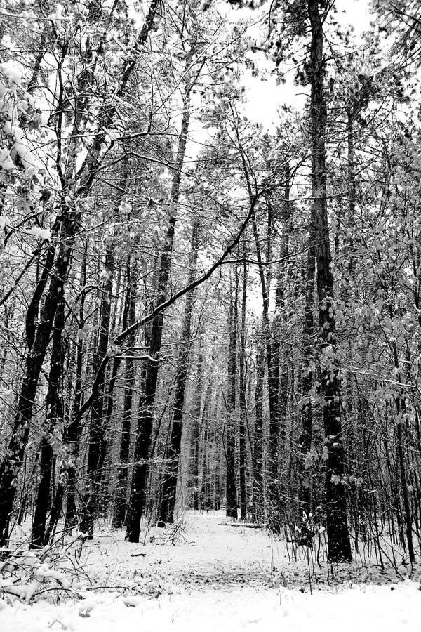 Χειμερινή ημέρα στα ξύλα στοκ εικόνες