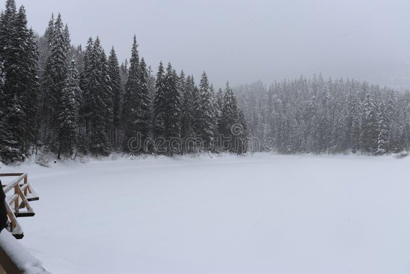 Χειμερινή λίμνη Synevir στοκ φωτογραφία