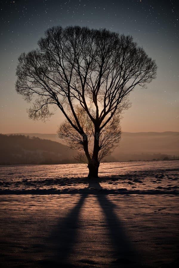 Χειμερινή νύχτα στοκ φωτογραφίες με δικαίωμα ελεύθερης χρήσης