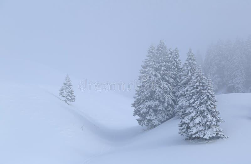 Χειμερινή ομίχλη στοκ εικόνα με δικαίωμα ελεύθερης χρήσης