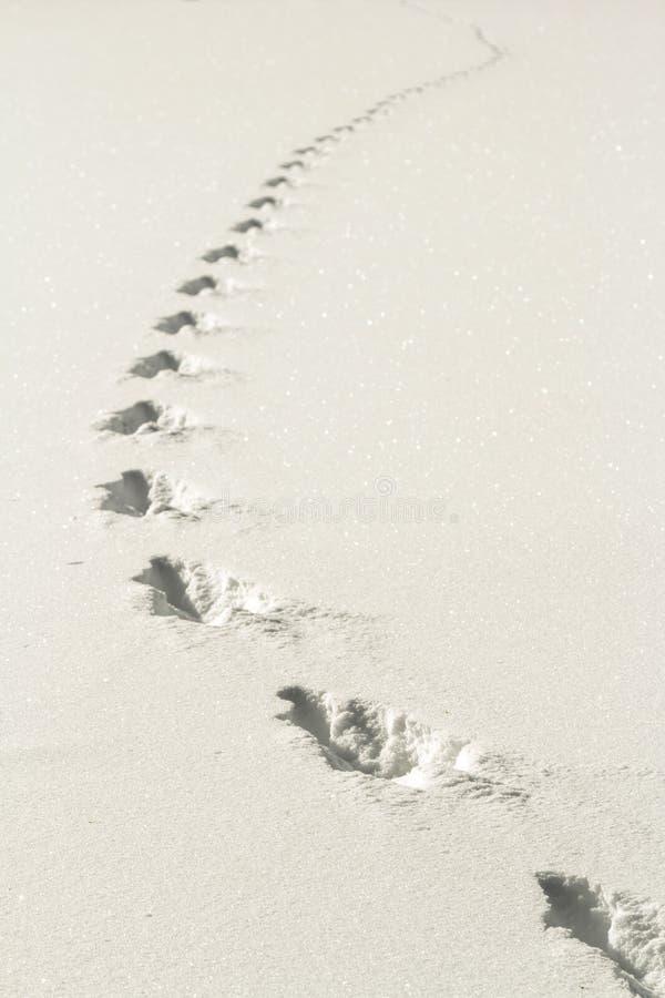 Χειμερινή πορεία στοκ φωτογραφίες