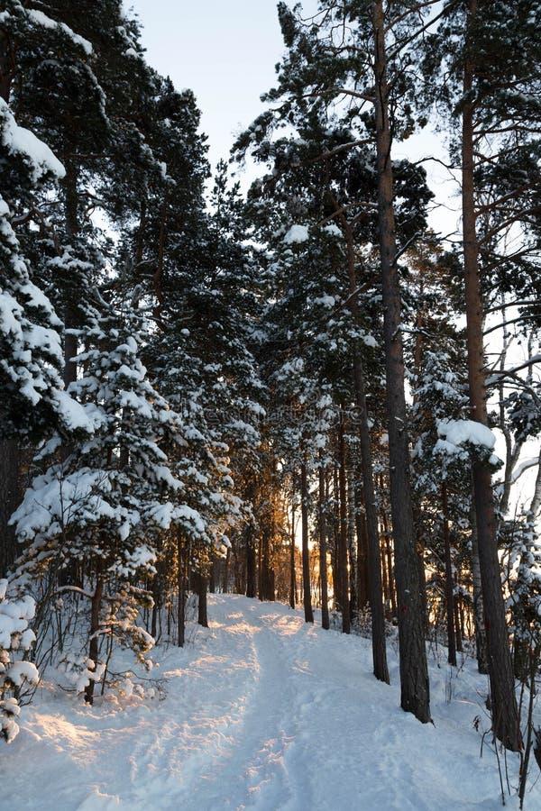 Χειμερινή πορεία στοκ εικόνες με δικαίωμα ελεύθερης χρήσης