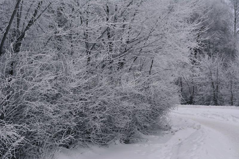 Χειμερινή σκηνή με τα δέντρα στη χιονώδη συννεφιάζω ημέρα hoarfrost στην πόλη στοκ φωτογραφίες