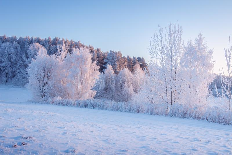 Χειμερινή σκηνή Παγετός και χιόνι σε γραφική πρωινή χρονιά Χιονισμένο χειμερινό τοπίο στο φως του ήλιου Όμορφη παγωμένη φύση στοκ φωτογραφία με δικαίωμα ελεύθερης χρήσης