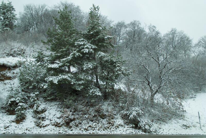 Χειμερινή σκηνή στο δάσος στοκ φωτογραφία με δικαίωμα ελεύθερης χρήσης