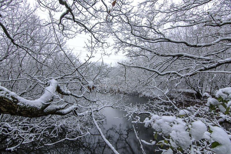 Χειμερινή σκηνή - χιονοπτώσεις στο πάρκο χώρας Wirral στοκ φωτογραφία με δικαίωμα ελεύθερης χρήσης