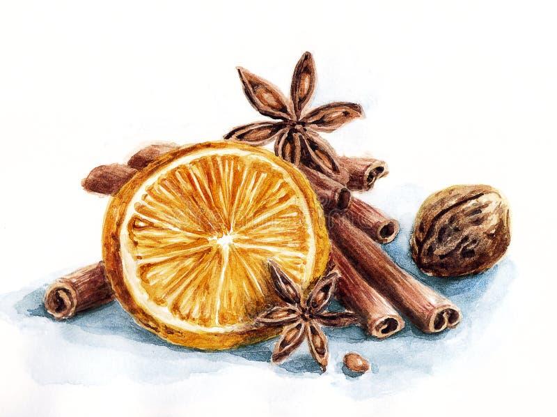 Χειμερινή σύνθεση του πορτοκαλιού και των καρυκευμάτων διανυσματική απεικόνιση