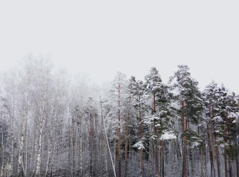 Χειμερινός δασικός πόλεμος στοκ εικόνες