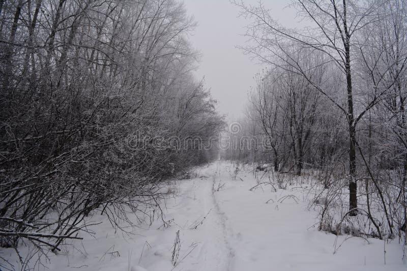 Χειμερινός δρόμος μέσω του δάσους με τα δέντρα που καλύπτονται από το χιόνι στοκ φωτογραφία με δικαίωμα ελεύθερης χρήσης