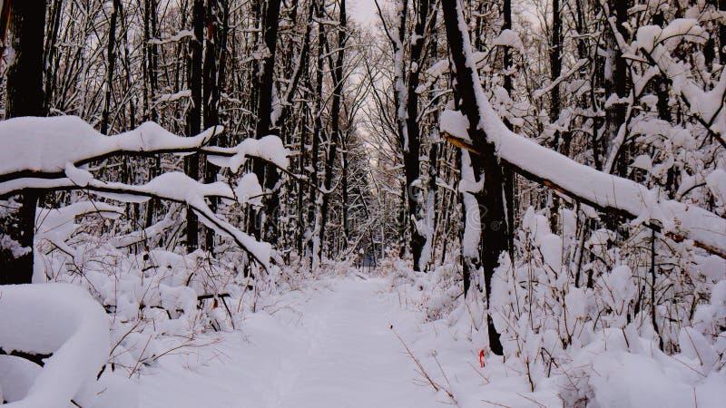 Χειμερινός δρόμος σε ένα χιονώδες δάσος στοκ φωτογραφία με δικαίωμα ελεύθερης χρήσης