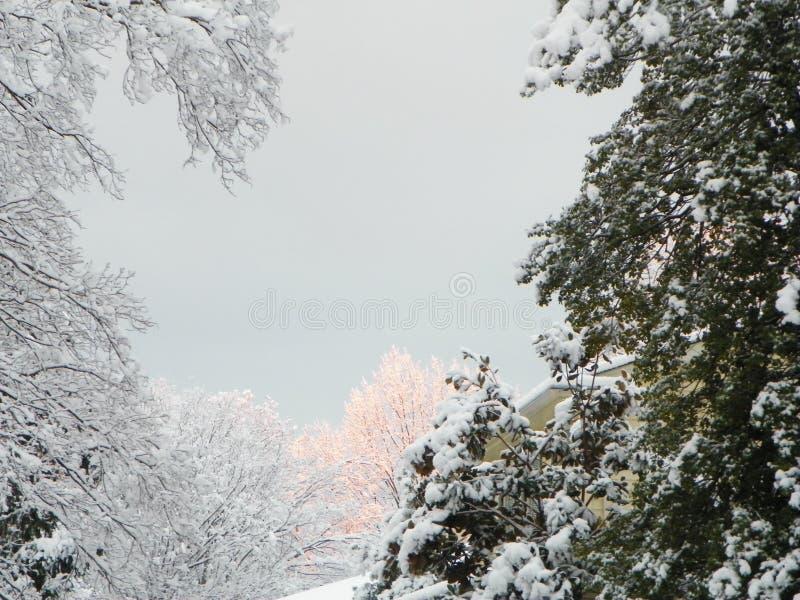 Χειμερινός ουρανός με το χιόνι στοκ εικόνα