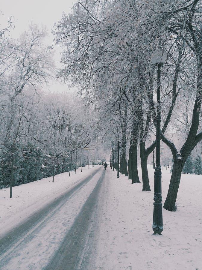 Χειμερινός τρόπος στοκ εικόνες
