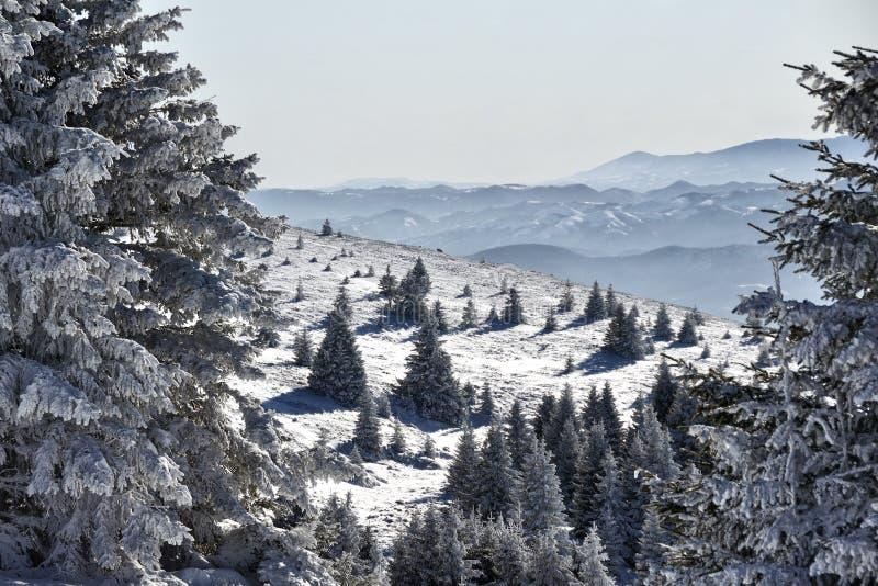 Χειμερινό δάσος στη Σερβία στοκ εικόνα με δικαίωμα ελεύθερης χρήσης