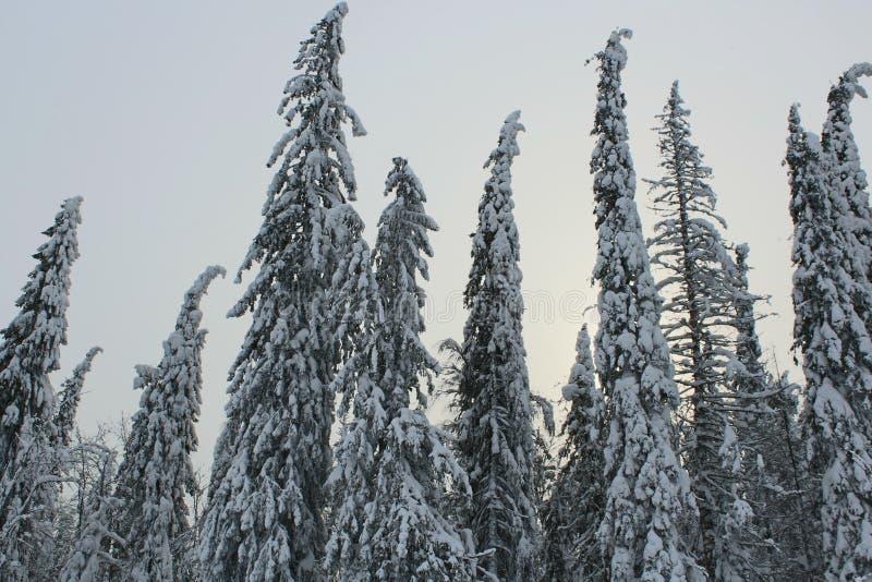 χειμερινό δάσος στοκ εικόνες