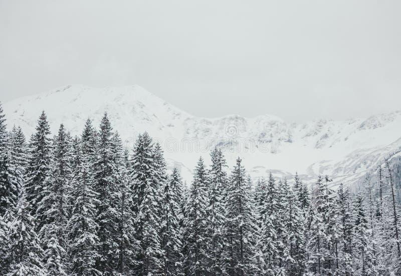 Χειμερινό άσπρο δασικό πανόραμα με το χιόνι στα βουνά Tatra Πανοραμική όμορφη άποψη χειμερινών εμπνευσμένη τοπίων στοκ εικόνες