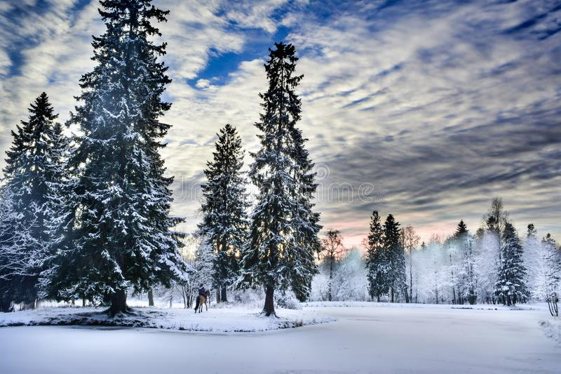 Χειμερινό δάσος θαύματος που καλύπτεται από το χιόνι στοκ φωτογραφία
