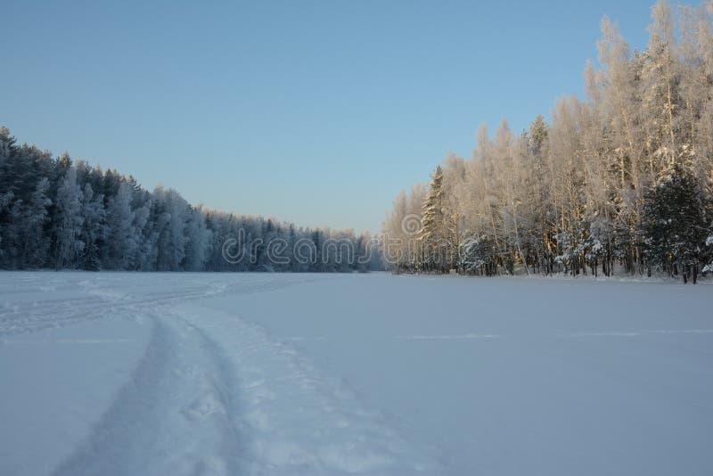 Χειμερινό δάσος και ακτή μιας παγωμένης λίμνης στοκ εικόνα με δικαίωμα ελεύθερης χρήσης