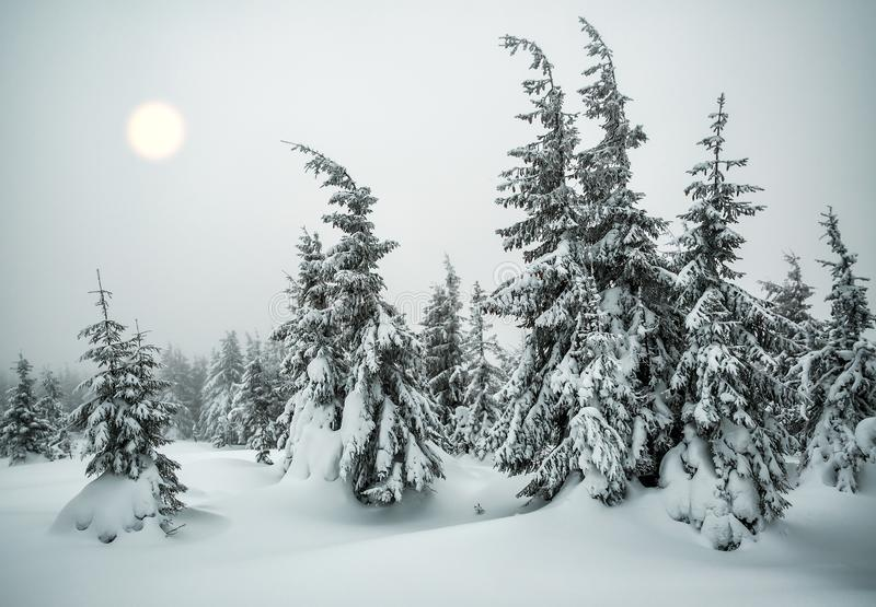 Χειμερινό δάσος στην ομίχλη στοκ εικόνα