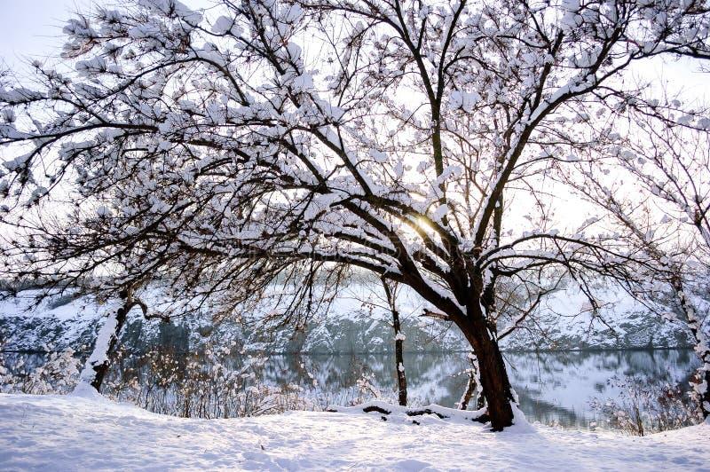 Χειμερινό δάσος στον ποταμό στο ηλιοβασίλεμα Ζωηρόχρωμο τοπίο με το χιονώδες δέντρο το κρύο βράδυ στοκ φωτογραφία
