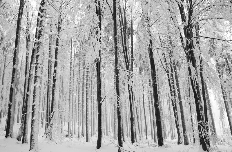 χειμερινό δάσος στοκ εικόνες με δικαίωμα ελεύθερης χρήσης