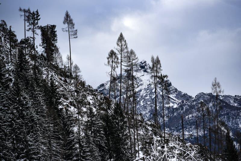 Χειμερινό δασικό τοπίο βουνών στους δολομίτες στην Ιταλία στοκ φωτογραφία με δικαίωμα ελεύθερης χρήσης