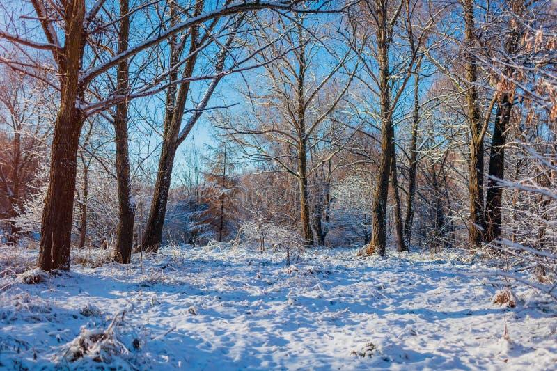 Χειμερινό δασικό τοπίο στο ηλιοβασίλεμα Χιονώδες τοπίο με το μπλε ουρανό στοκ φωτογραφία