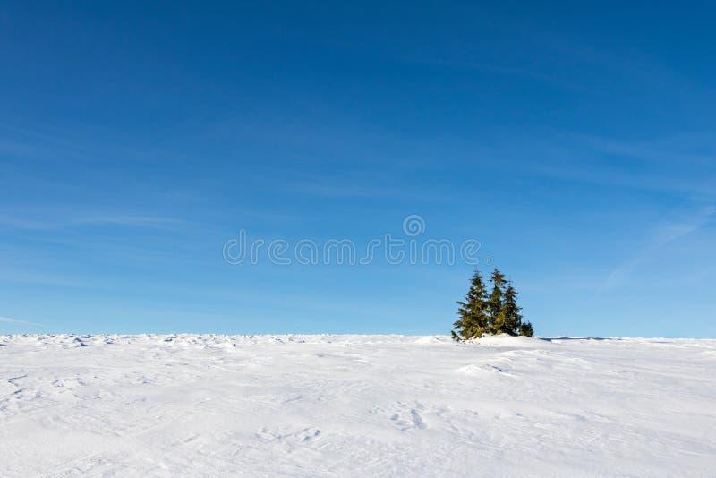 Χειμερινό μινιμαλιστικό τοπίο με το χιόνι, τον ουρανό και τα δέντρα στοκ εικόνα με δικαίωμα ελεύθερης χρήσης