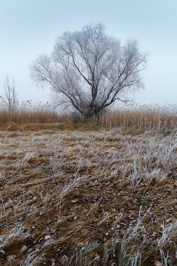 Χειμερινό μόνο δέντρο στοκ φωτογραφία με δικαίωμα ελεύθερης χρήσης