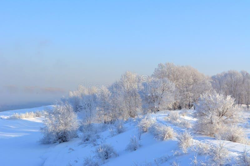 Χειμερινό πανόραμα με τα χιονισμένα δέντρα Όμορφο τοπίο της χώρας των θαυμάτων στοκ εικόνες