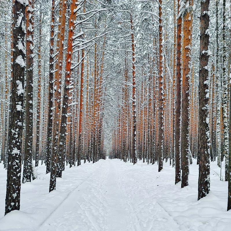 Χειμερινό παραμύθι στοκ εικόνες