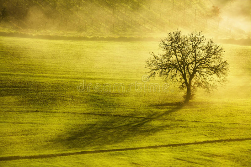 Χειμερινό πρωί της Τοσκάνης, μόνες δέντρο και ομίχλη Ιταλία στοκ φωτογραφία