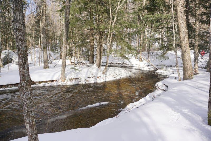 Χειμερινό ρεύμα κάτω από τα κωνοφόρα και τα αποβαλλόμενα δέντρα στοκ φωτογραφίες