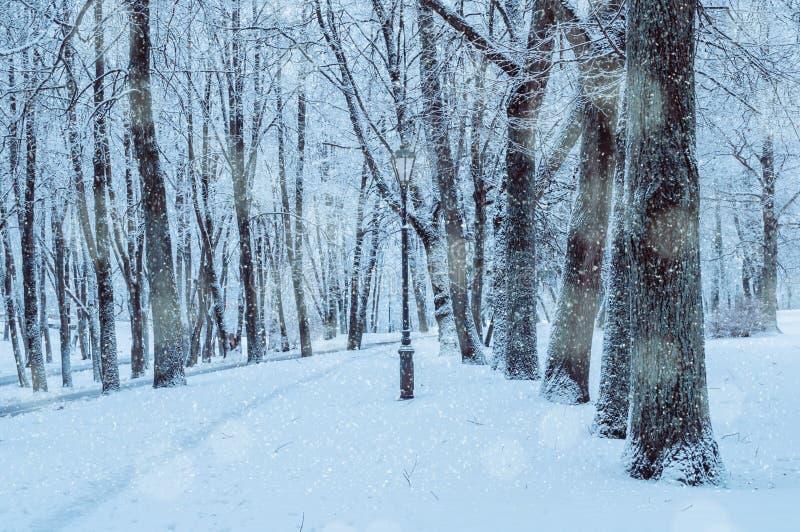 Χειμερινό τοπίο με μειωμένα snowflakes - πάρκο χωρών των θαυμάτων με τις χιονοπτώσεις Χιονώδης σκηνή χειμερινών τοπίων στοκ εικόνες