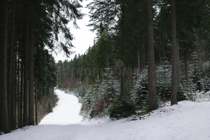 Χειμερινό τοπίο με τα δέντρα κωνοφόρων στο δάσος στοκ φωτογραφία με δικαίωμα ελεύθερης χρήσης